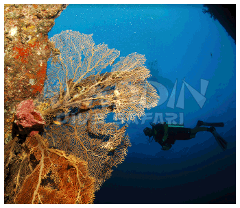 Diving at the Andaman Sea in Thailand and Myanmar