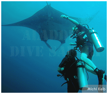 Manta rays at the dive site Koh Bon. Divers can have sightings with manta rays here frequently