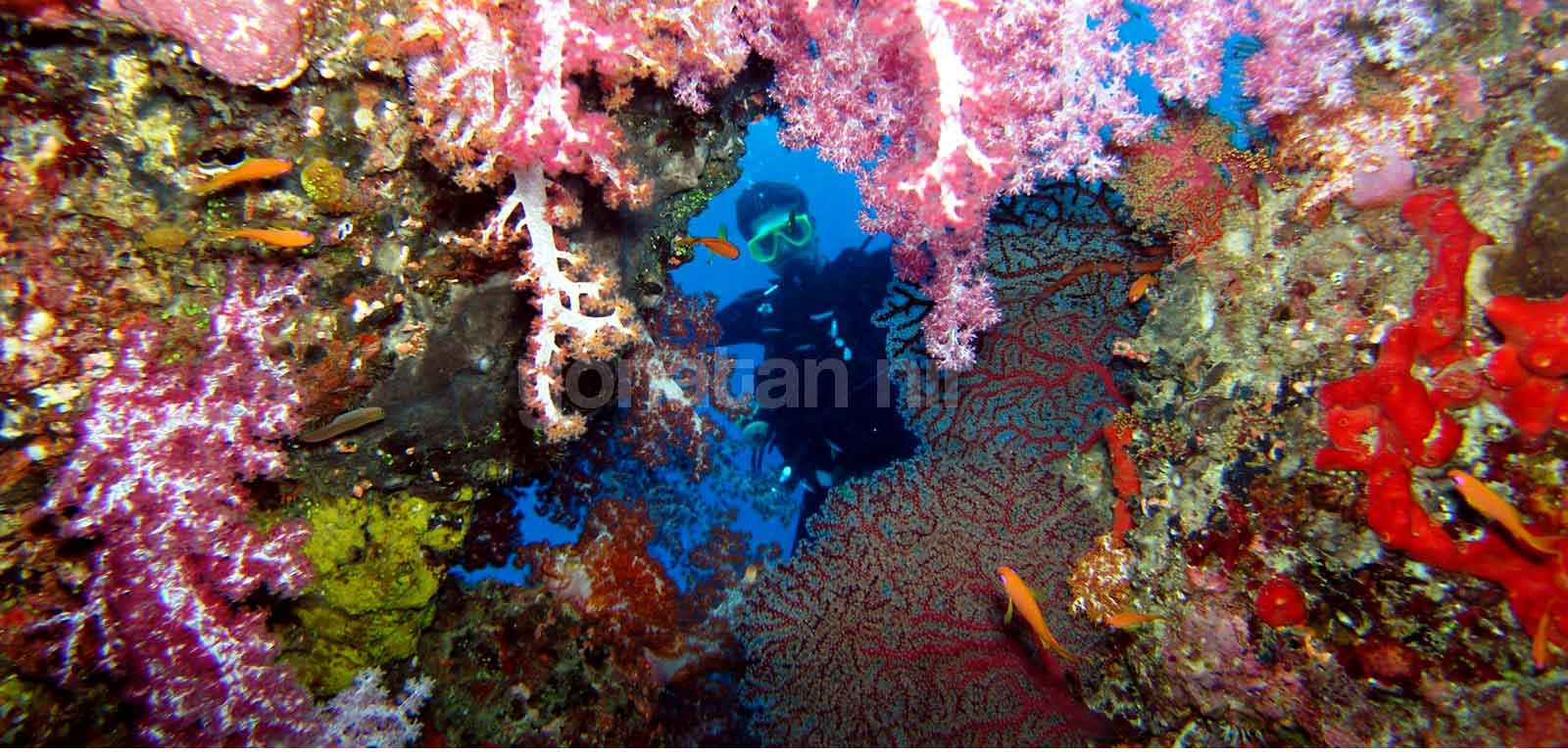 View of a reef at the Similan Islands in Thailand, while diving with Aladdin Dive Safari